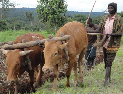 Farming to Empower
